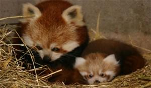 birthpanda